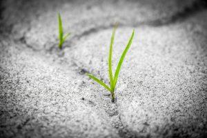 Motivation Grass